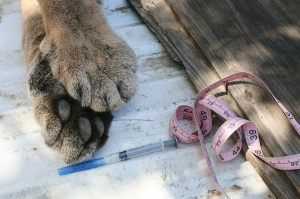P-32's feet are shown after he was killed Aug. 10, 2015. (Credit: National Park Service)