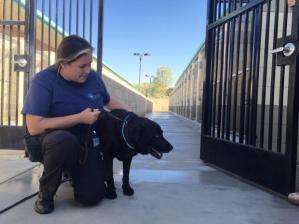 One of several missing dogs is shown after being found by an officer following the break-in at the Jurupa Valley shelter. This photo was tweeted Sept. 14, 2015, by Riverside County Animal Services.