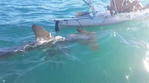Video captured a shark encounter off Dana Point on Sept. 13, 2015. (Credit: Bill Morales)