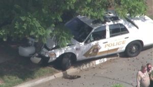 A Rancho Cucamonga Police Department vehicle crashed into a tree at the end of a pursuit in Pasadena on Oct. 15, 2015. (Credit: KTLA)