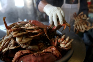 A cook at Nick's Lighthouse in San Francisco prepares Dungeness crab on Nov. 5, 2015, when the California Fish and Game Commission voted to delay the recreational Dungeness crab fishing season due high levels of the deadly neurotoxin domoic acid, which has been found in the meat and viscera of Dungeness crabs caught off the coast. (Credit: Justin Sullivan/Getty Images)