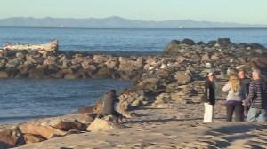 The search for a missing fisherman resumed off Ventura harbor on Nov. 21, 2015. (Credit: KTLA)