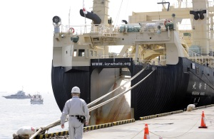 Police and coast guard boats patrol beside the 8,044-tonne Nisshin Maru, a mother ship of research whaling fleet docking at a pier of the Tokyo port on April 15, 2008. (Credit: TOSHIFUMI KITAMURA/AFP/Getty Images)