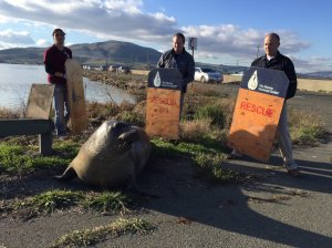 CHP's Marin Office tweeted this photo of efforts to coax an elephant seal back onto the water in the Sonoma area on Dec. 28, 2015.