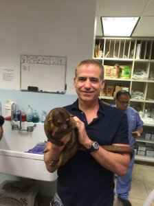 An official with the South Dade Avian and Exotic Animal Medical Center holds a kinkajou after it was found in an elderly woman's Miami home. (Credit: South Dade Avian and Exotic Animal Medical Center)