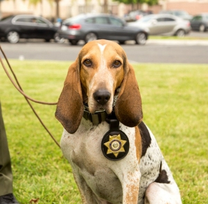 K-9 Ellie is seen in a photo provided by the San Bernardino County Sheriff's Department.