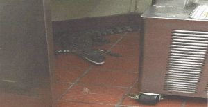 A South Florida man was taken into custody after he was accused of placing an order at a Wendy's in Royal Palm Beach, Florida, taking his drink and then pitching in a three-and-a-half foot gator through the drive-thru window when the server turned around. (Credit: Florida Fish and Wildlife Conservation Commission)