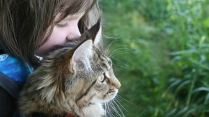 Six-year-old Iris Grace Halmshaw, who has autism, immediately bonded with Thula when her parents brought the affectionate Maine Coon kitten home two years ago. (Credit: Courtesy Arabella Carter-Johnson)
