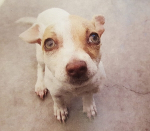Bubba the puppy is seen in a photo released by the Tustin Police Department.