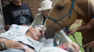 Vietnam veteran Roberto Gonzales reunited with his two beloved horses outside a Texas VA hospital over the weekend. (Credit: Lupe Hernandez/VA Hospital)