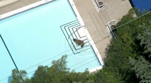 Aerial video from Sky5 shows a bear cooling off in a pool in the La Cañada Flintridge neighborhood on June 8, 2016.