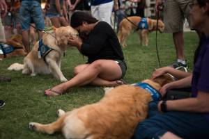 Melissa Soto cuddles with a therapy dog near a memorial for the victims of the Pulse Nightclub shooting, on June 14, 2016, in Orlando, Florida. (Credit: Drew Angerer/Getty Images)