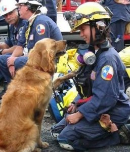 Bretagne, believed to be the last surviving 9/11 Ground Zero search dogs, was euthanized Monday, June 6, 2016. (Credit: CY-Fair Volunteer Fire Dept/FB)