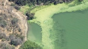 The edge of Pyramid Lake is shown on July 13, 2016, when an algal bloom was present. (Credit: KTLA)