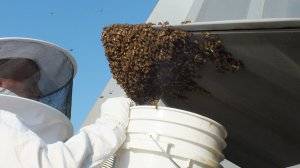 The bees were eventually removed from the aircraft. (Credit: Master Sgt. Carlos Claudio/USAF)