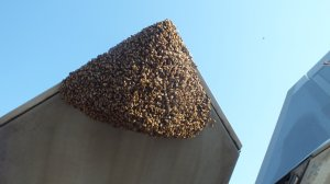A huge swarm of bees grounded an F-22 Raptor in Virginia. (Credit: Master Sgt. Carlos Claudio/USAF)