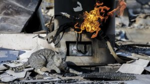 A cat wandering around jumps way from hot surface and flames emitting at still smoldering structure at Hess Road. (Credit: Irfan Khan / Los Angeles Times)