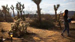 Victoria GeVoian, executive officer of the Institute of Mentalphysics, walks through part of the 400-acre desert landscape used for meditation and group retreats. (Credit: Gina Ferazzi / Los Angeles Times)