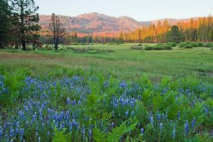 Ackerson Meadow is shown in a photo posted to Facebook by Yosemite National Park (Credit: Robb Hirsch)