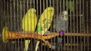 Some birds are seen after being rescued from a pet store that caught fire in Lennox on Oct. 25, 2016. (Credit: KTLA)