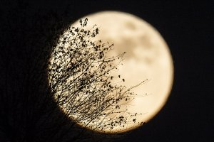 Vegetation is seen as the 'supermoon' rises over Heho, Myanmar's Shan state, on November 14, 2016. (Credit: YE AUNG THU/AFP/Getty Images)