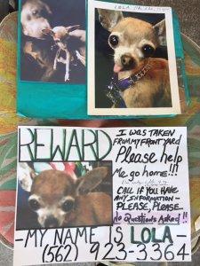 A reward is being offered for the safe return of Lola. (Credit: KTLA)