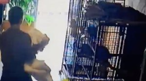 Surveillance video caught a woman taking an African grey parrot from a small business in South Gate on Nov. 17, 2016.