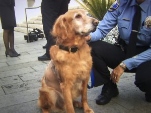 Henry the dog, who was found wandering Newport Beach with a 46-pound tumor, is recovering and was at a news conference on Dec. 14, 2016. (Credit: KTLA)