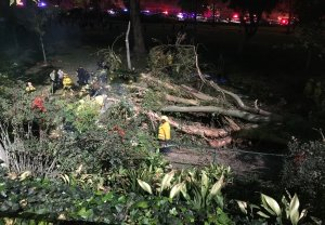 Several people were injured after a tree fell on a wedding party in Whittier on Dec. 17, 2016. (Credit: KTLA)