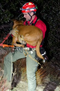 A hiker and her dog were rescued on Friday, Feb. 25, 2017 after falling over a cliff. (Credit: LASD)