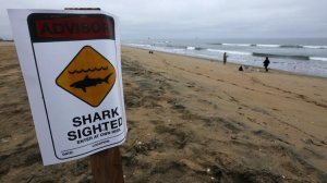 Lifeguards are keeping a stretch of shoreline between Sunset Beach and Bolsa Chica State Beach closed to swimmers and surfers after a shark sighting. (Credit: Mark Boster / Los Angeles Times)