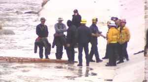 Recovery crews investigate a dead body found on an island in the L.A. River on Feb. 25, 2017. (Credit: KTLA)