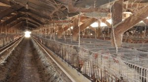 Hohberg Poultry Ranches, who will face more than four dozen charges for animal cruelty, is seen in a photo issued by the San Bernardino County District Attorney's Office /The Humane Society of the United States.