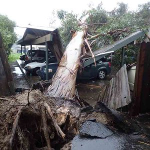 A large eucalyptus tree toppled onto a carport near Santa Barbara on Feb. 17, 2017. (Credit: Santa Barbara County Fire Department)