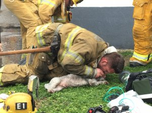 Dog receives mouth-to-snout emergency treatment in a KTLA file photo.