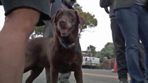 """Coco"" is reunited with a San Clemente couple after running off during a fire on Aug. 24, 2017. (Credit: KTLA)"