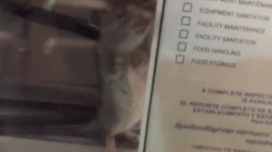 A still from a video posted on Facebook on Aug. 16, 2017, shows a rat scurrying across a counter and next to a health department inspection compliance sign at a Tommy's restaurant in Long Beach.