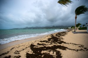 A picture taken on September 5, 2017 shows a view of the Baie Nettle beach in Marigot, with the wind blowing ahead of the arrival of Hurricane Irma. (Credit: LIONEL CHAMOISEAU/AFP/Getty Images)