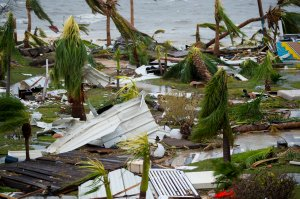 """A photo taken on Sept. 6, 2017 shows destroyed palm trees, outside the """"Mercure"""" hotel in Marigot, on the Bay of Nettle, on the island of Saint-Martin in the northeast Caribbean, after the passage of Hurricane Irma. (Credit: LIONEL CHAMOISEAU/AFP/Getty Images)"""