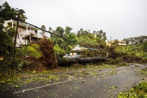An uprooted tree covers a small house in a village near Pointe-a-Pitre on Sept. 19, 2017, in the French territory of Guadeloupe after the passage of Hurricane Maria. (Credit: Cedrick Isham Calvados / AFP / Getty Images)