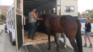 Residents help a horse get in a trailer in a Burbank neighborhood affected by the La Tuna Fire on Sept. 2, 2017. (Credit: KTLA)