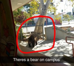 Pasadena Rosebud Academy provided this Snapchat image of a bear on campus on Oct. 24, 2017.