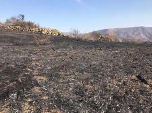The area where wild flowers were blooming at Weir Canyon Wilderness Park in March was scorched during the Canyon Fire 2 on Oct. 10, 2017. (Credit: Chip Yost/KTLA)