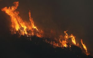 The Thomas Fire burns trees on December 8, 2017 in the Los Padres National Forest. (Credit: Mario Tama/Getty Images)