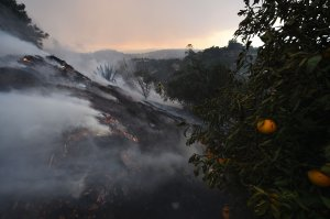 A firefighter puts out hotspots on a smoldering hillside in Montecito as strong winds blow smoke and embers inland, Dec. 16, 2017. (Credit: Robyn Beck / AFP / Getty Images)