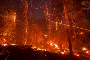 A strong wind blows embers from smoldering trees as the Thomas Fire burns in Montecito on Dec. 16, 2017. (Credit: David McNew / Getty Images)