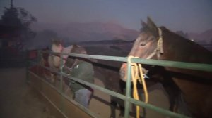 As the Creek Fire burns, horses await transport from Gibson Ranch in Shadow Hills on Dec. 5, 2017. (Credit: KTLA)