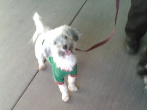 One of the dogs seized at from the home of David and Louise Turpin is seen in a photo provided by the city of Perris.