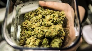 A case of marijuana buds at Cathedral City Collective Care in Riverside County. (Credit: Los Angeles Times)