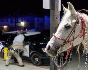 A horse is seen as a CHP officer take a man into custody for riding the animal while drunk on the 91 Freeway in Long Beach on Feb. 24, 2018. (Credit: CHP)